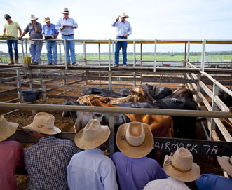 Roma Cattle Saleyards